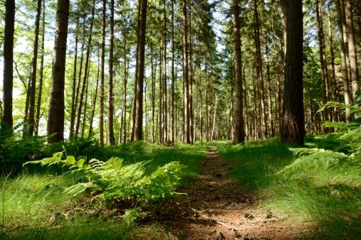 Culpabilité ressentie des mères : l'arbre qui cache la forêt